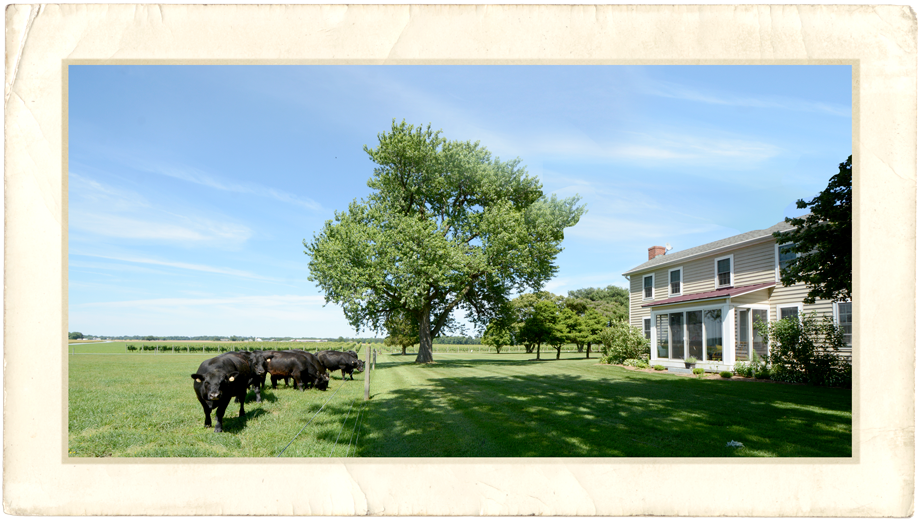 Crow Farmstay B&B