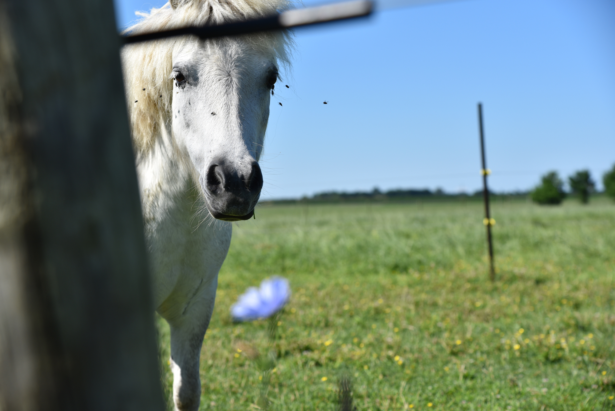 Crow Vineyard & Winery Ponies