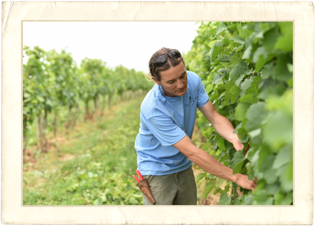 Brandon Hoy Crow Vineyard Manager