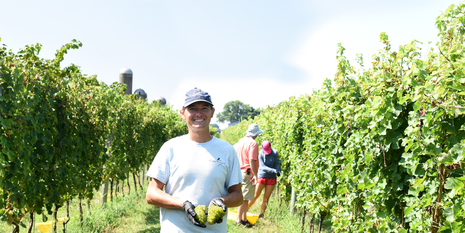 Crow Vineyard & Winery harvest